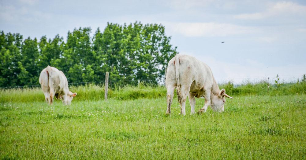 Photo of Budget Pac : les éleveurs de bovins viande subissent un prélèvement de 185M€