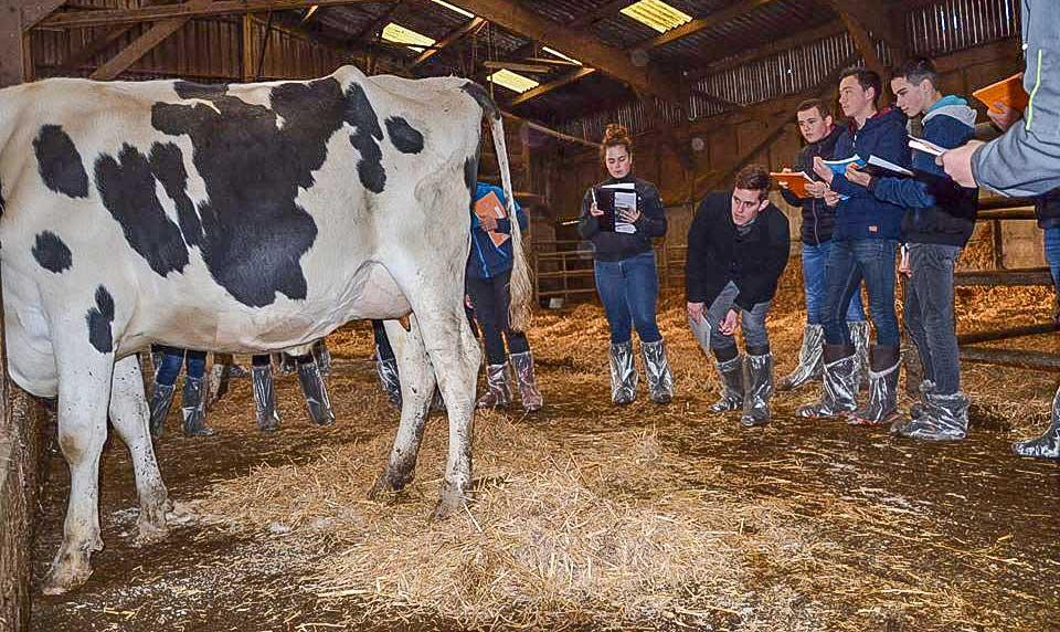 Photo of Du sérieux dans le jugement des vaches