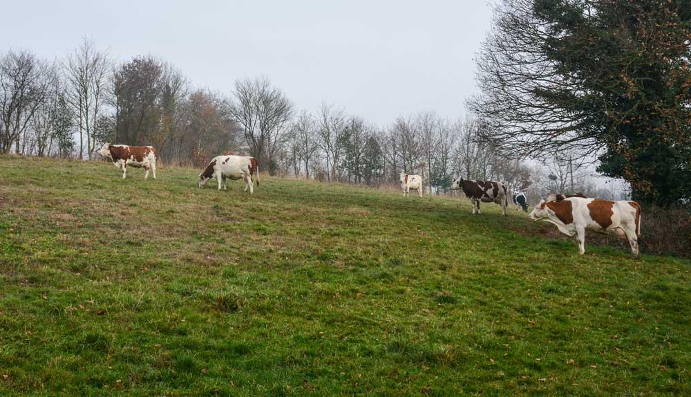 Photo of Simplicité, autonomie et valeur ajoutée en élevage laitier