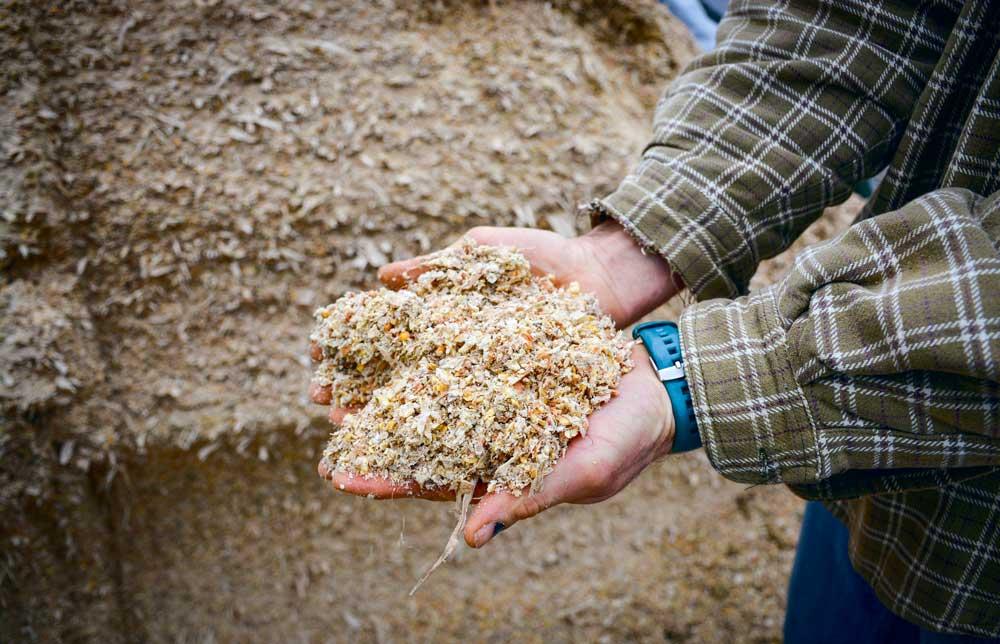 Photo of Se lancer dans le maïs épi en Cuma ?