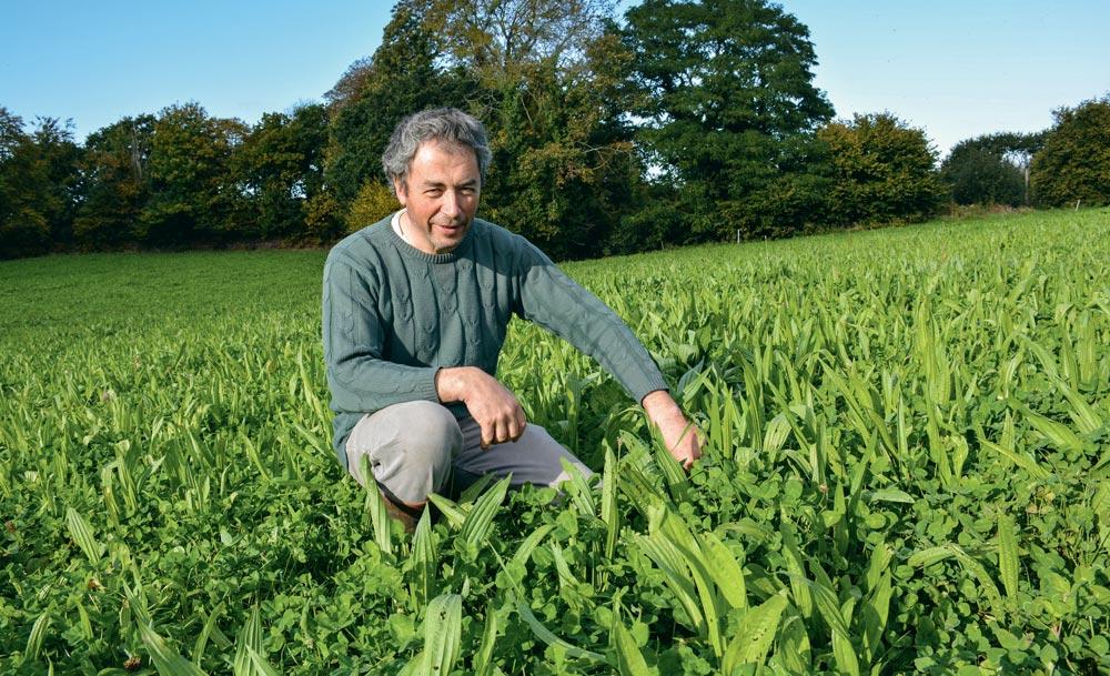 Pascal Salaün producteur de lait bio à Ploubezre (22) au milieu d'une parcelle ou la chicorée et le plantain se sont bien développés résistant à l'été sec.