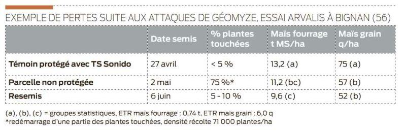 pertes-attaques-geomyze-mais