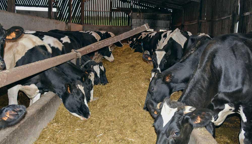 Photo of Une surveillance plus facile avec un troupeau géré en lots