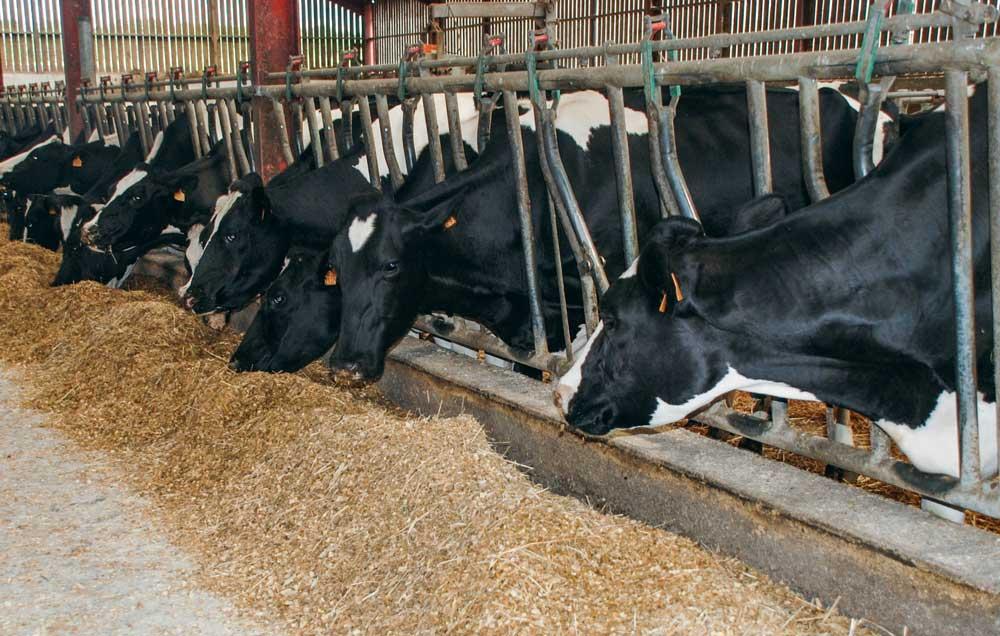 La baisse du niveau de production ou des taux peut être le signe d'une plus faible ingestion des vaches.