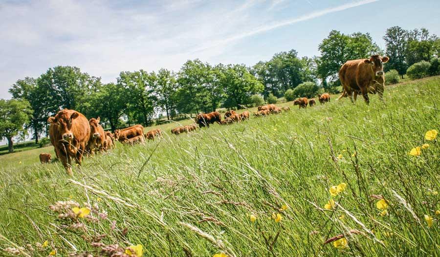 Photo of Des exportations de broutards stables en début d'année