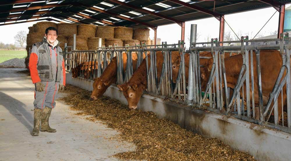 Photo of Taureaux Limousins : un vivier génétique sans cesse renouvelé