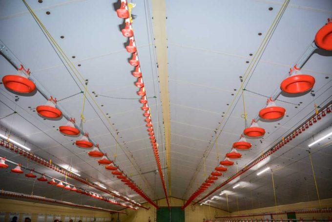 Julien Le Fur a équipé son bâtiment de 5 lignes de pipettes et de 4 chaînes d'alimentation fonctionnant sur treuil électrique.
