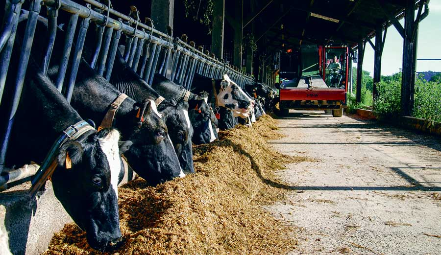mais-ensilage-alimentation-vaches