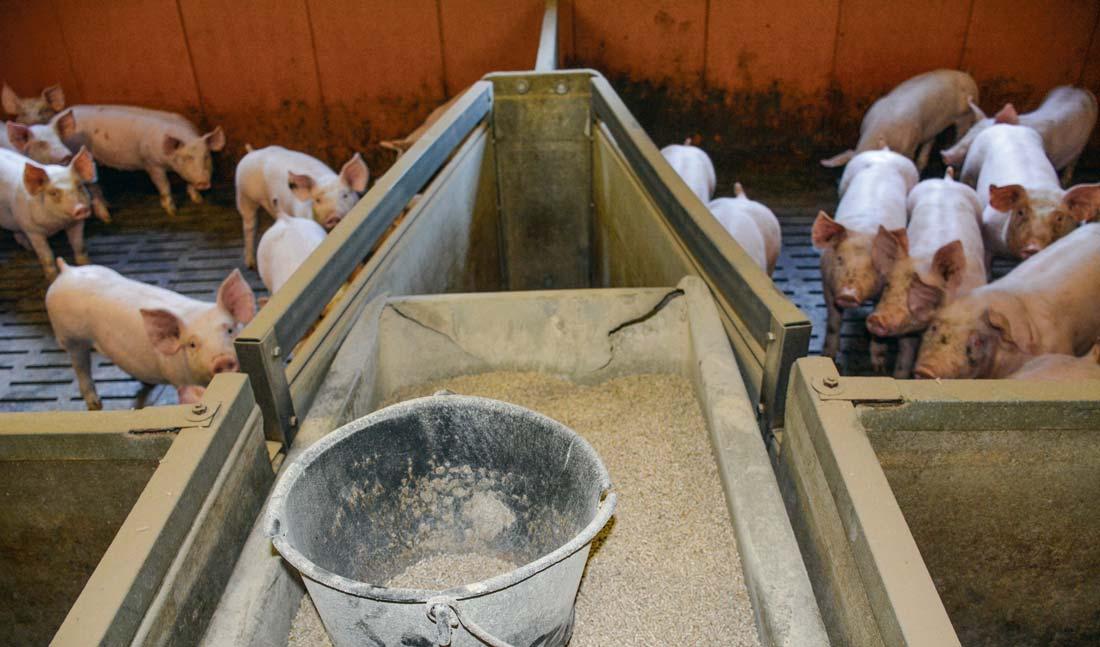 Photo of Porélia : travailler sur le coût alimentaire