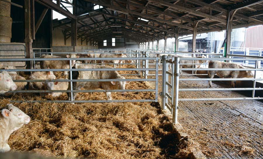 Photo of L'aire raclée conservée pour les taurillons