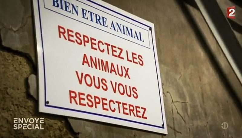 Photo of Abattoirs : Envoyé Spécial se penche sur les employés du secteur