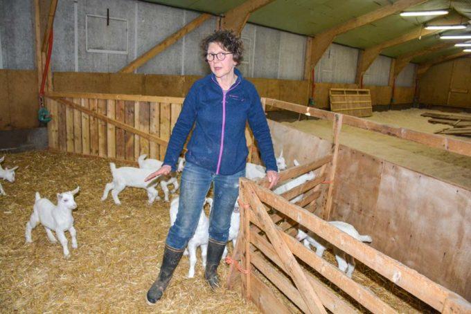 Les 4 premiers jours de vie des chevreaux, Fernande Guillomon bloque les animaux deux fois par jour, pour s'assurer d'une prise quotidienne de lait suffisante à la louve.