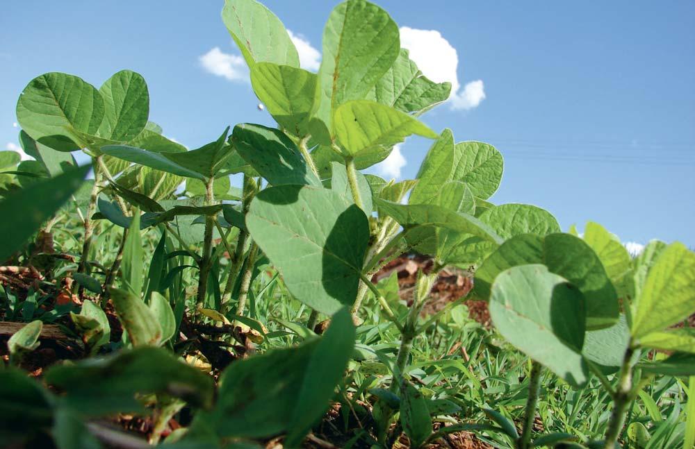 plantation-soja-alimentation
