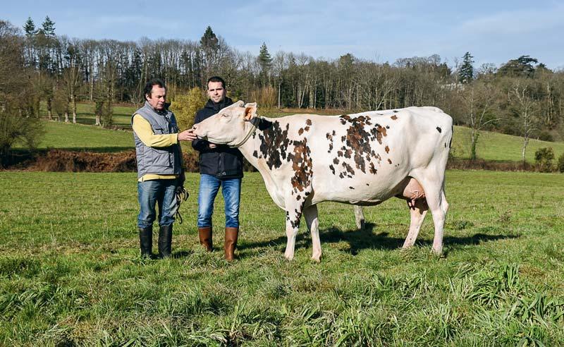 Grâce à Hiver, Éric et Nicolas Lefeuvre sont heureux et fiers de participer pour la première fois au concours de la race Normande au salon de l'agriculture.