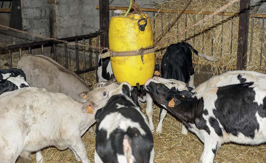 Photo of De la laiterie aux veaux, une pompe pousse le yaourt