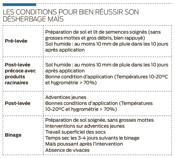 condition-desherbage-mais