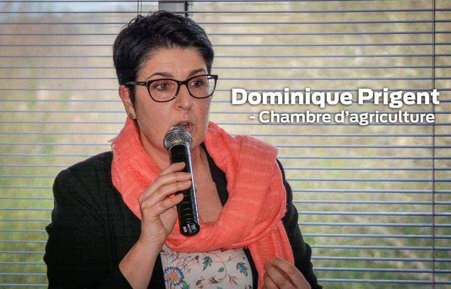 dominique-prigent