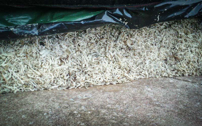 Photo of L'ensilage de betterave peut remplacer le maïs