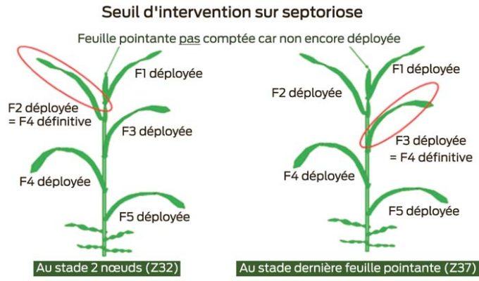 intervention-septoriose