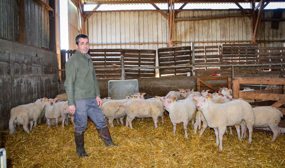 Photo of Plus d'agneaux labellisés pour une meilleure rentabilité
