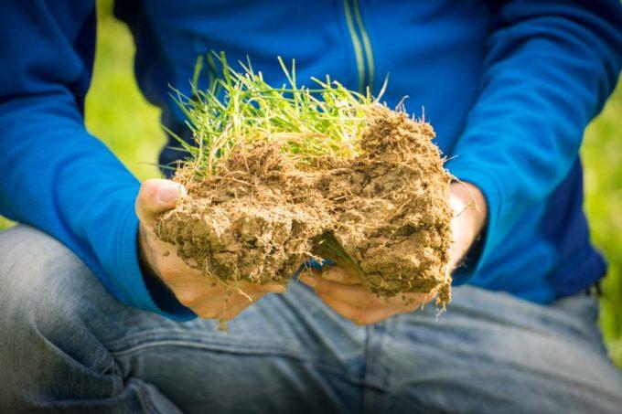 Dans cette prairie, les racines, asphyxiées, ne descendaient pas au-delà de 7cm de profondeur.