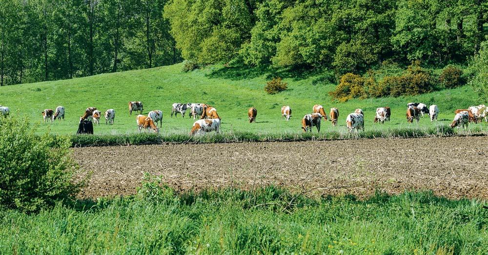 Photo of L'environnement va redistribuer le lait