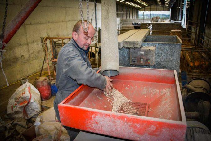L'aplatissage est réalisé tous les jours, pour distribuer 3 kg de lupin par vache.