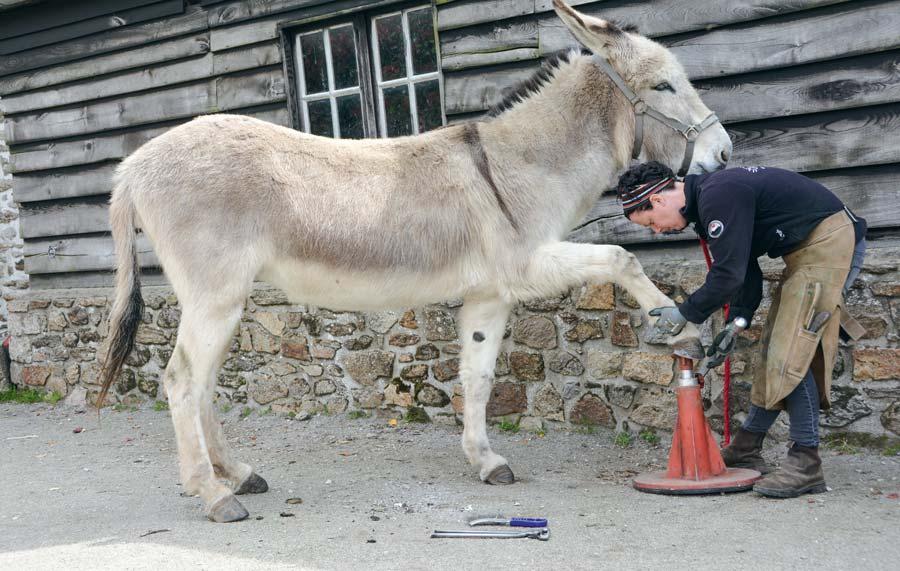 Hélène Peron trouve toujours une position qui est confortable pour l'animal.