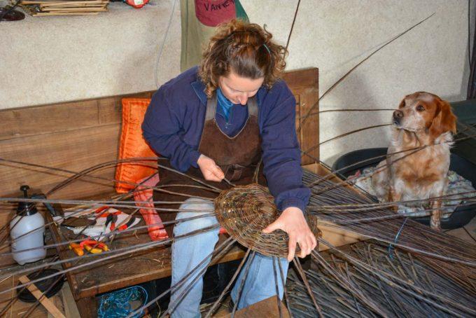 La vannière pique les montants sur le fond du panier. Ils serviront pour le tressage du corps du panier.