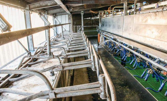 À gauche, on observe comment les murs ont été découpés pour que les vaches puissent passer leurs encolures en se plaçant sur le quai perpendiculairement à la fosse.