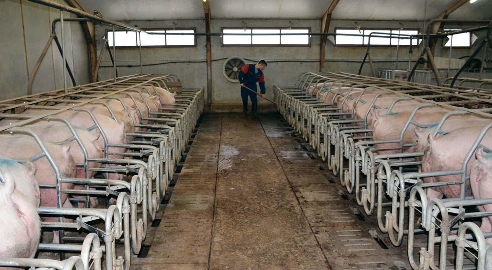 Photo of Les éleveurs ont besoin d'un coup de main-d'œuvre