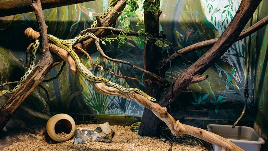Photo of Serpenter dans les allées du terrarium de Kerdanet