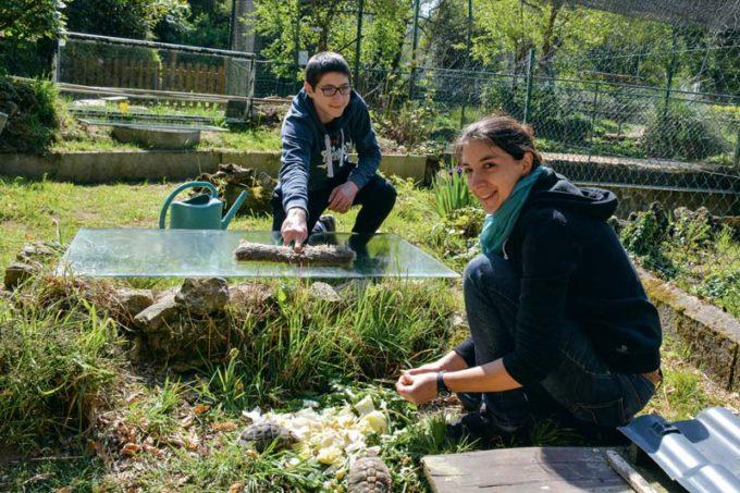 Katell Quistinic, responsable du terrarium et Théo Laguilliez, bénévole, lors du nourrissage des tortues et de l'entretien de leur espace de vie.