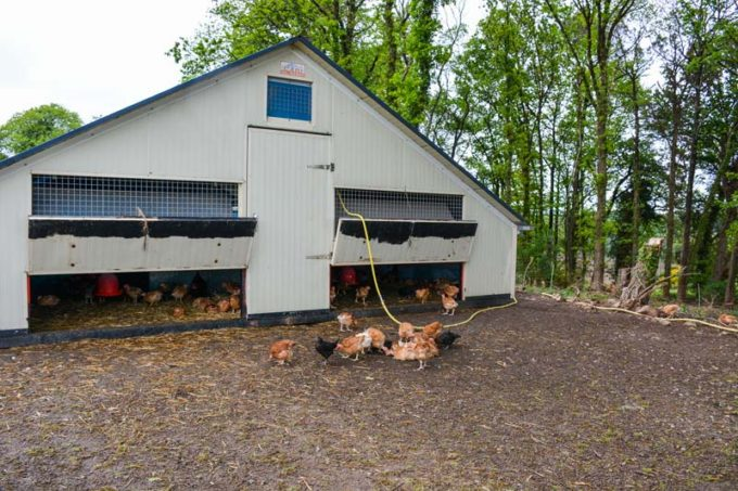 Les bâtiments déplaçables de 60 m2 sont pratiques pour changer de parcours à chaque bande de volailles.