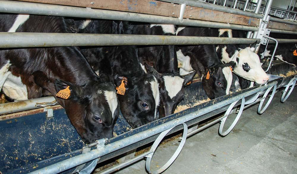 Photo of -40% d'antibiotiques en veau de boucherie depuis 2013