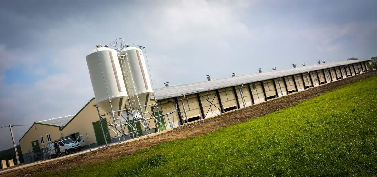 Le poulailler de 1 770 m2 équipé d'un système volière accueille 30 000 pondeuses qui profiteront d'un parcours de 12 ha à partir de l'âge de 22 semaines.