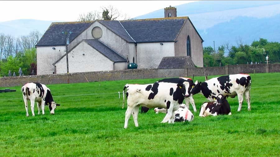 Irlande-lait_Troupeau-James-et-Pat