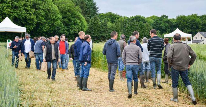 La Cecab et la Coop de Broons présentaient des innovations en cultures (plate-forme d'essais) et en élevage mardi dernier à Illifaut (22) sur différents ateliers. Près d'un millier d'agriculteurs ont visité le site.