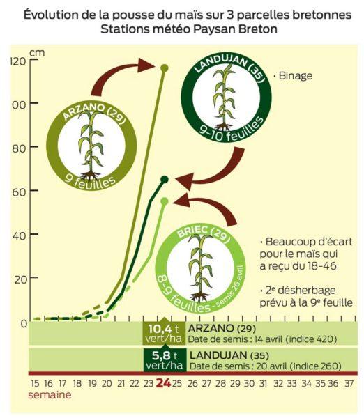 evolution-pousse-mais