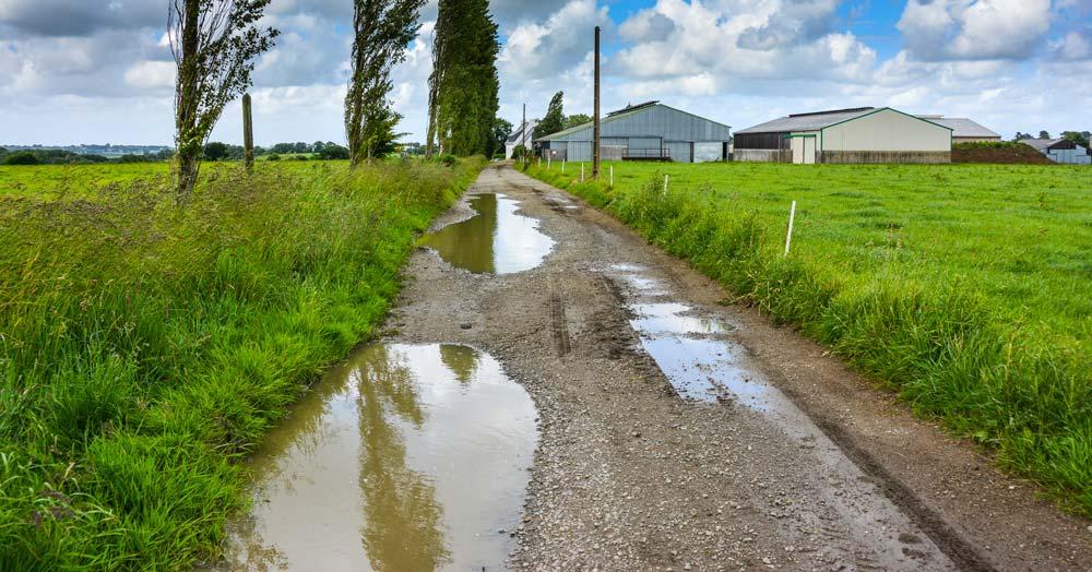 Photo of De l'herbe et de l'eau pour le confort des vaches