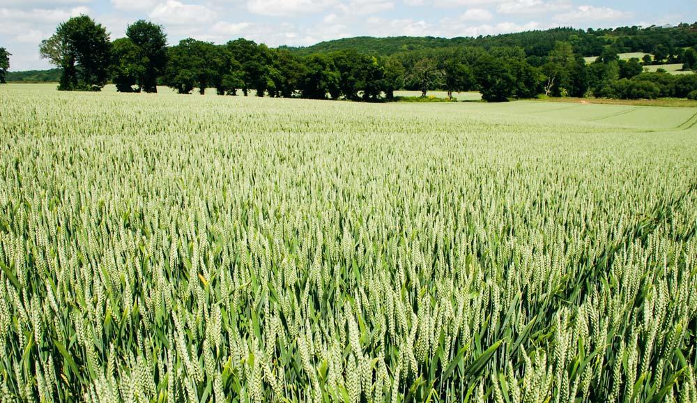 Photo of Marchés : blé ou viande, qu'exportera  la France demain?