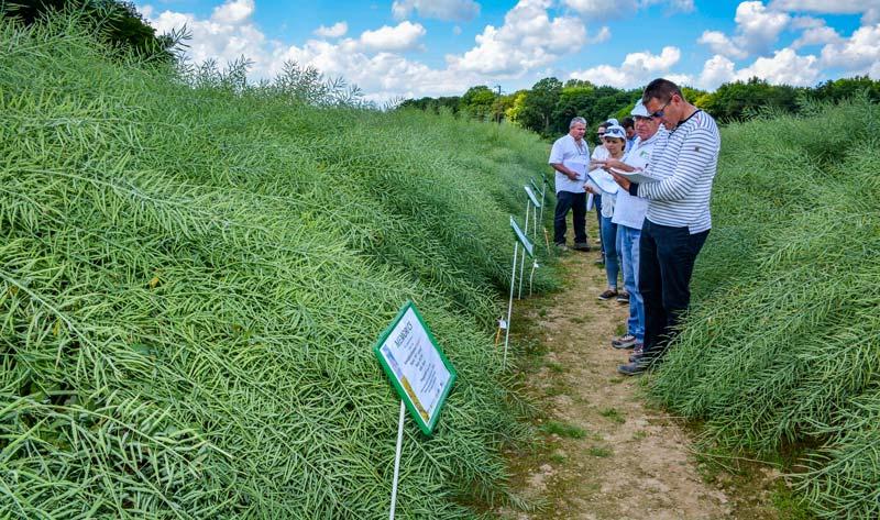 Les essais variétaux du Rheu ont été visités par différents acteurs de la filière colza, le 1er juin.