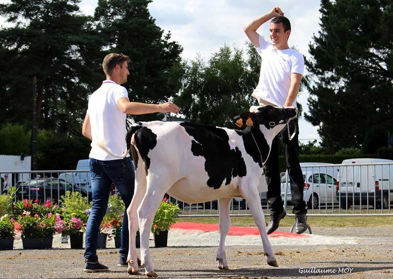 Gaec Rbx Holstein de ruffiac, grande championne 2017. ©Guillaume Moy