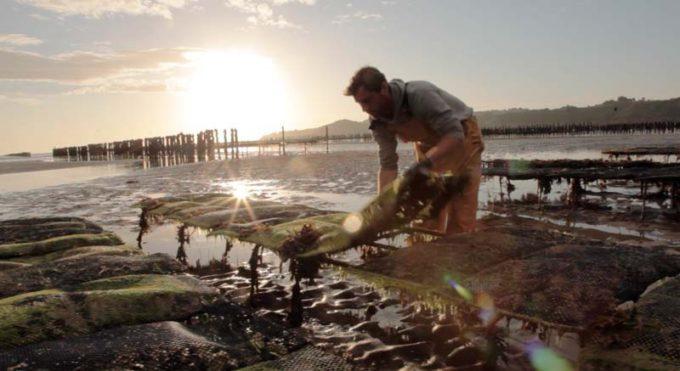Au gré des marées, Nicolas Nonnet passe deux fois par jour tourner les poches d'huîtres.