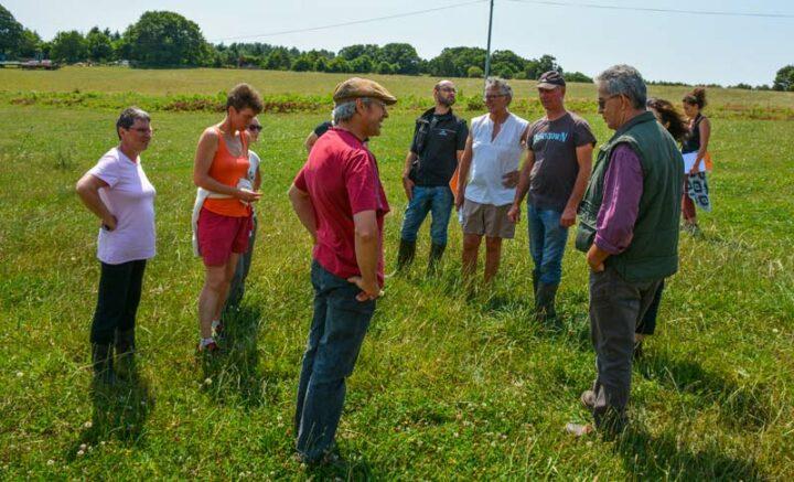 Le groupe d'échange du Civam 56 observe les résultats d'un sursemis permettant de renouveler rapidement une prairie.