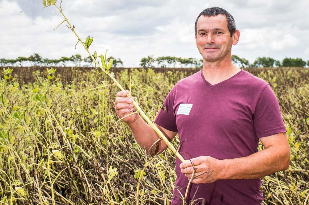 Laurent Vallée a semé de la féverole pour la première fois. Fin juin, il constatait que les gousses avaient noirci après le coup de chaleur, mais les graines étaient plutôt belles.