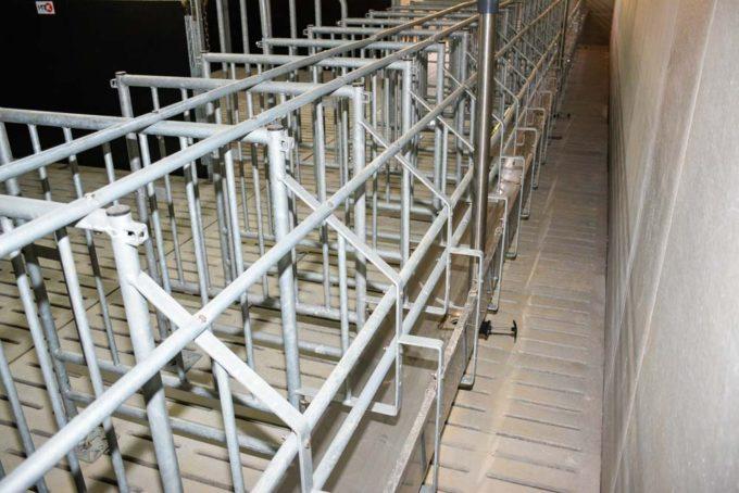 La quarantaine compte 4 cases de 5 places et 2 cases de truies (contamination). Les cochettes sont livrées toutes les 10 semaines pour une quarantaine longue. La verraterie compte 50 places de truies et 22 places pour les cochettes ( 50 cm de largeur et plus courtes). Une double rangée de tubes Led a été installée, à l'avant pour stimuler la venue en chaleur et, à l'arrière, pour l'éclairage lors des inséminations. Les trois salles de gestantes correspondent aux 3 bandes de 48 truies (lavages et vides sanitaires possibles, meilleure gestion de l'ambiance). Les animaux sont en lots de 7 à 9 truies, en bat-flanc. Un couloir avant permet de supplémenter les truies, au besoin. Chaque partie d'auge peut être vidangée par une petite vanne manuelle. Trois cases d'infirmerie ont été aménagées dans la verraterie.