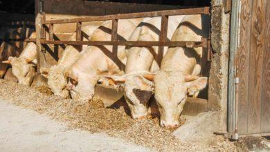 Photo of Filière cuir : des actions contre les griffures et les parasites