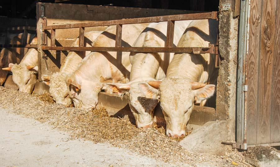 Supprimer les angles vifs et les aspérités en élevage permet d'éviter les agressions sur la peau des animaux.