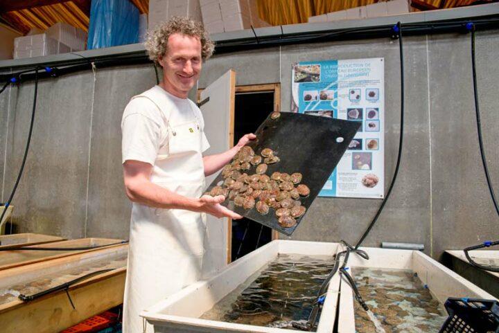 Sylvain Huchette présente des ormeaux qui seront quelques heures plus tard dans les assiettes d'un grand palace.